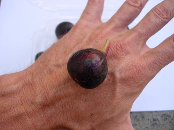 Ronde de Bordeaux fig are small with a weight of between 15-25 grams