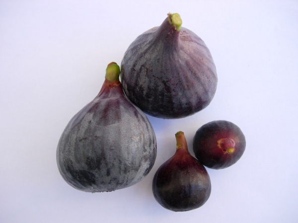 Ronde de Bordeaux next to a Tangiers variety fig.