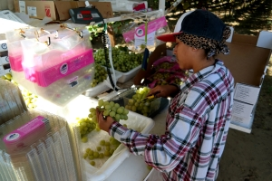 Cotton Candy grapes being weighed and packed in California, USA