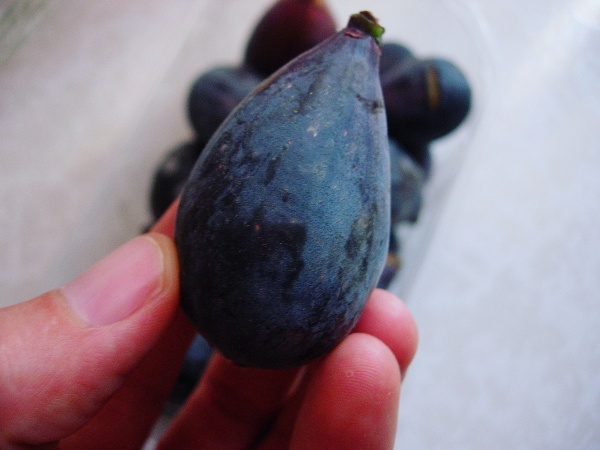 Colar variety fig