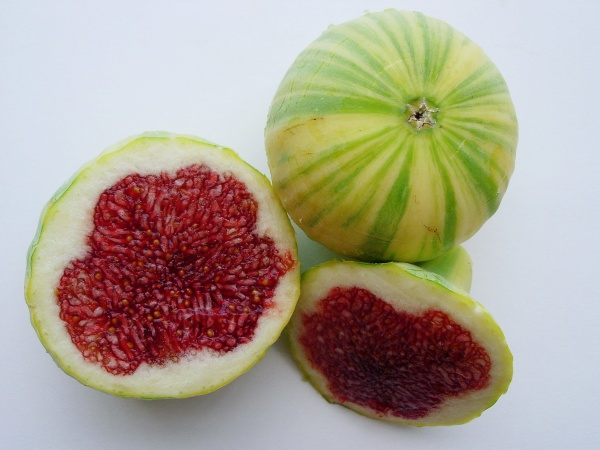 panache variety fig also known as Tiger fig
