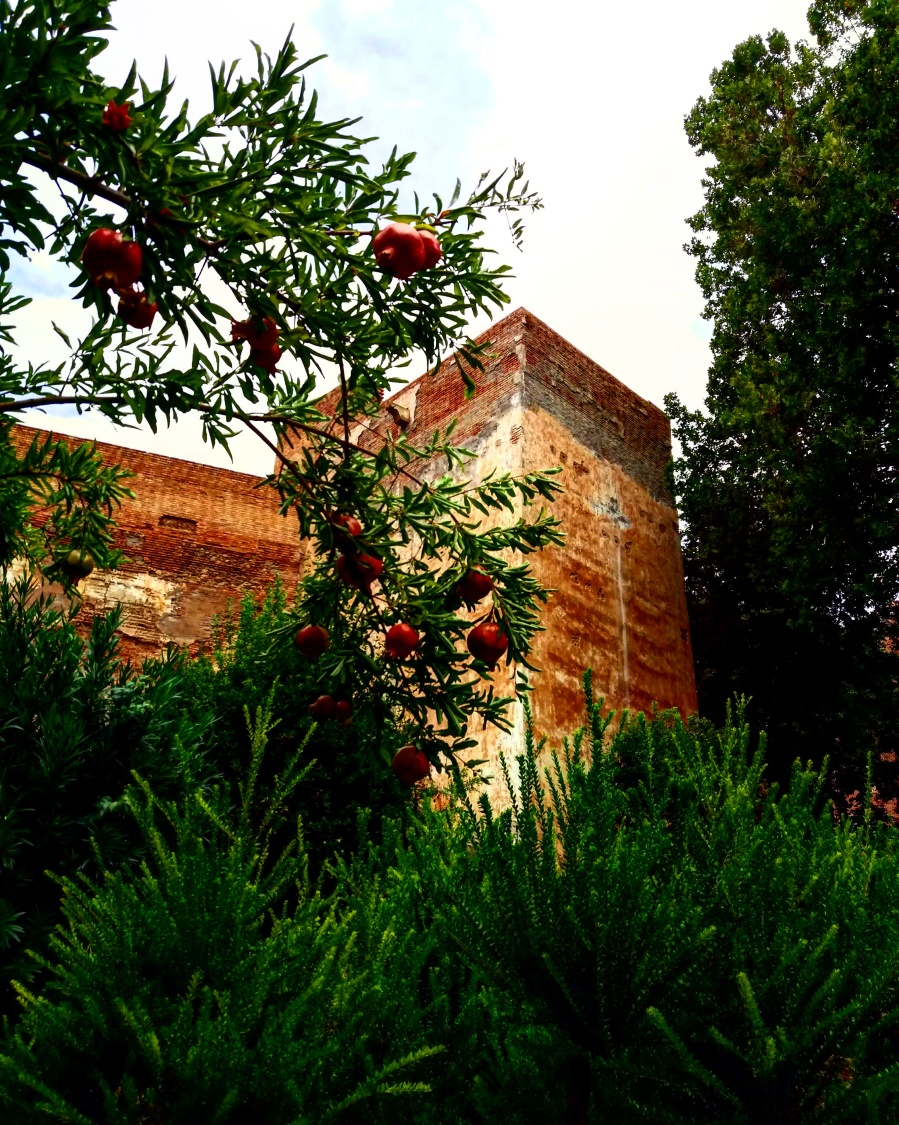 Pomegranate tree in the gardens surrounding La Alhambra