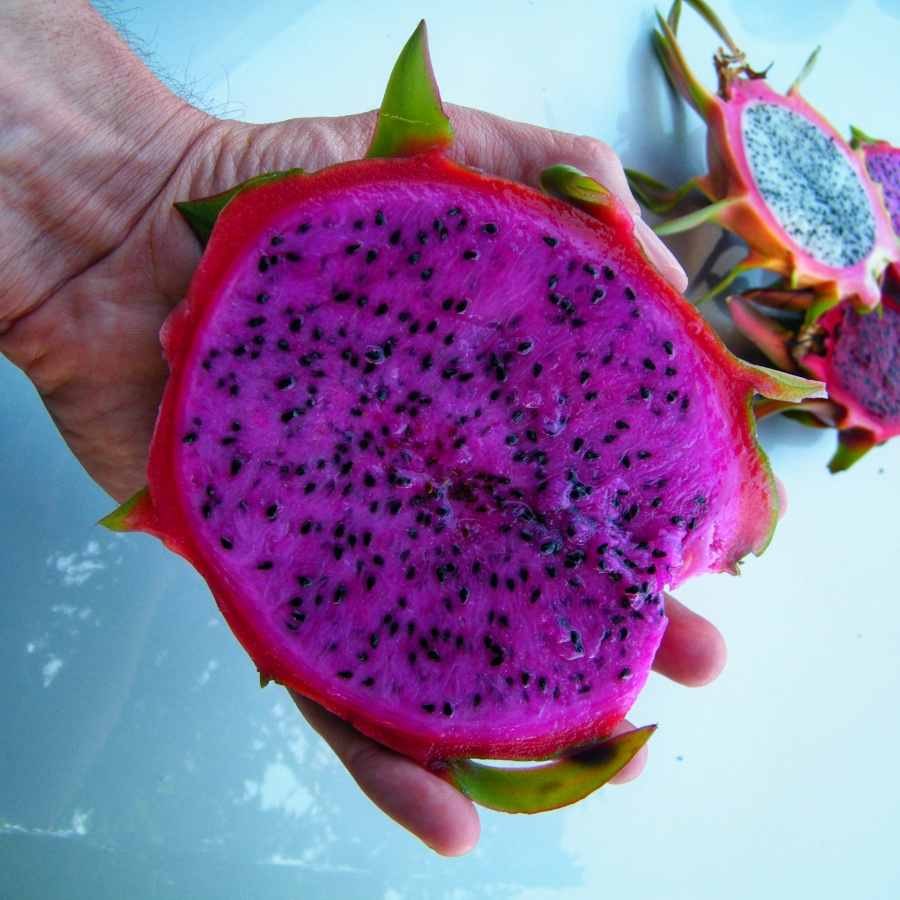 Pink flesh dragon fruit