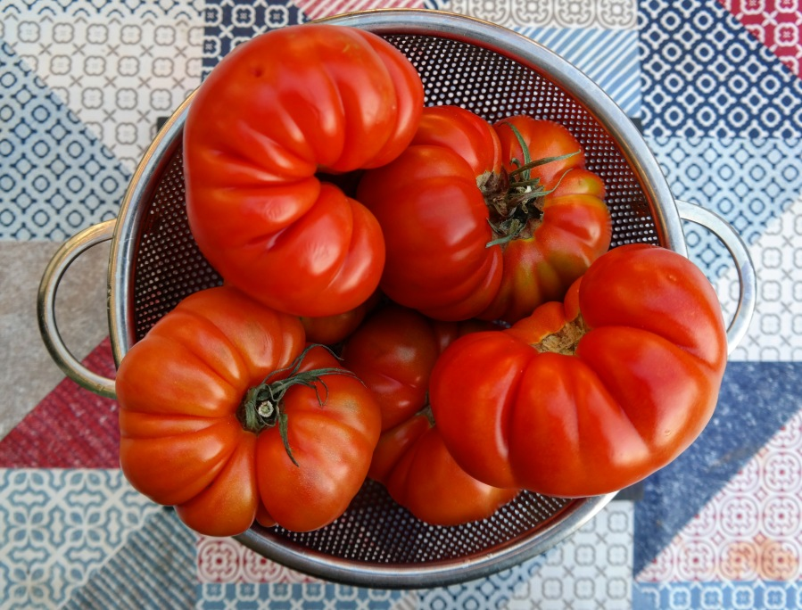Raf Tomatoes www.avarietyoffruits.com