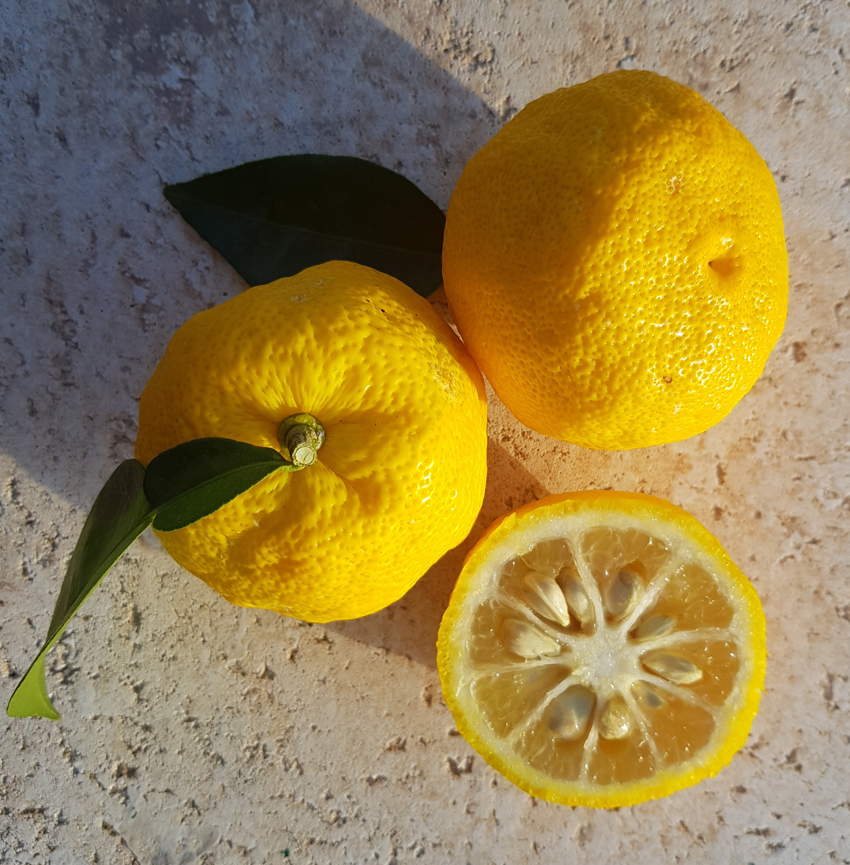 Skin and flesh colour resembles that of a lemon.